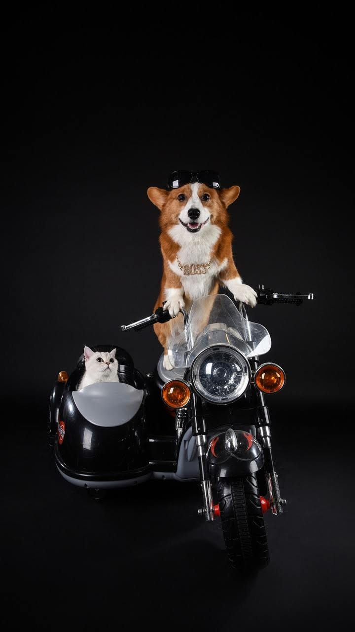 Animaux A Moto Animaux Animales Bebes Animaux