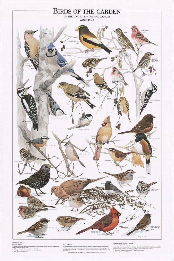 Birding In Ontariou0027s Southwest. Bird PosterChartsBackyard ...