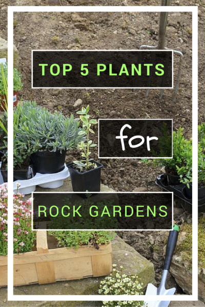 Rock gardens are fun, multi-dimensional spaces. The opportunity to populate the garden with diverse plants can create a fascinating show of color, texture and form.  Check out our top 5 plant recommendations for rock gardens. -   25 diy rock garden ideas