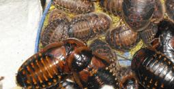 Roach Chow recipes