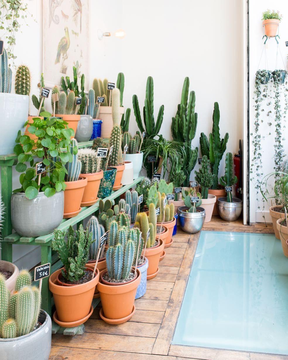 24 Plant Shops That Will Attract Any Plant Lover Dalla Vita