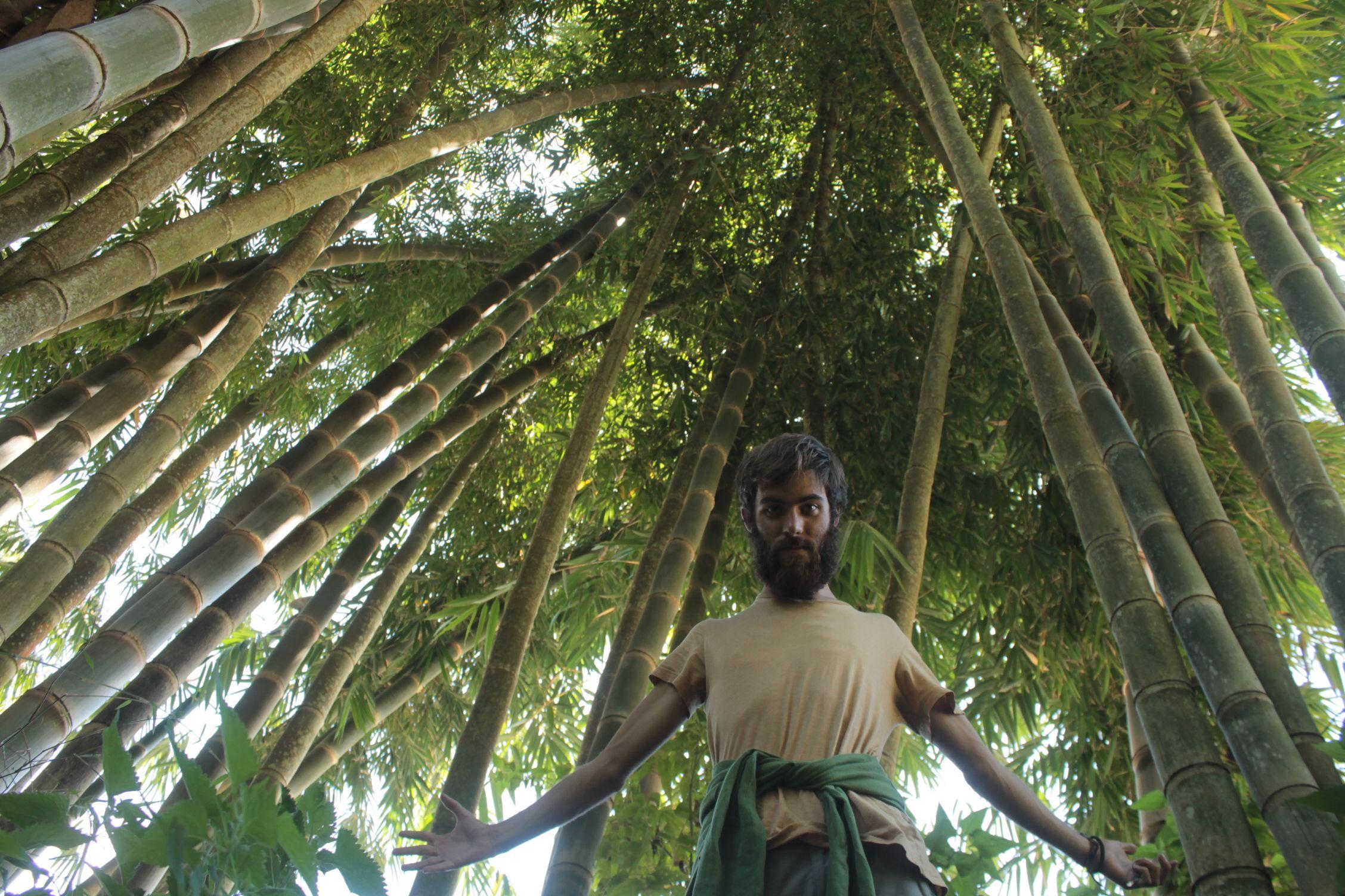 Bosque de bambú en Bajawa
