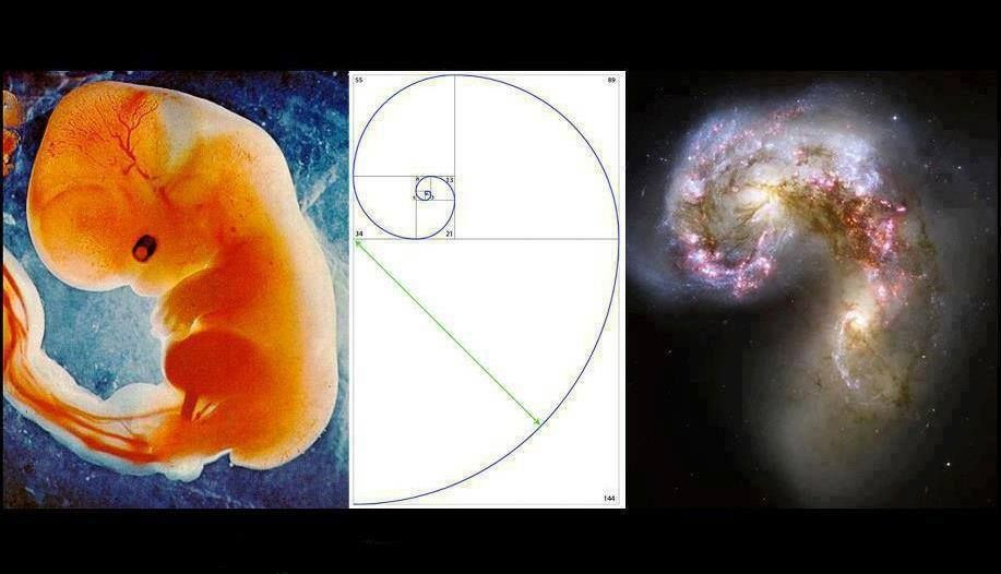 Image result for fetus vs spiral in galaxy