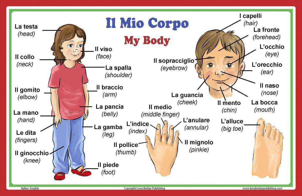 Body parts in Italian