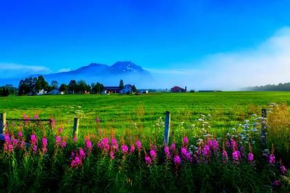 Beautiful Scenery 162014 High Quality And Resolution Wallpapers On Wallbasehq Com Scenery Field Wallpaper Flower Field