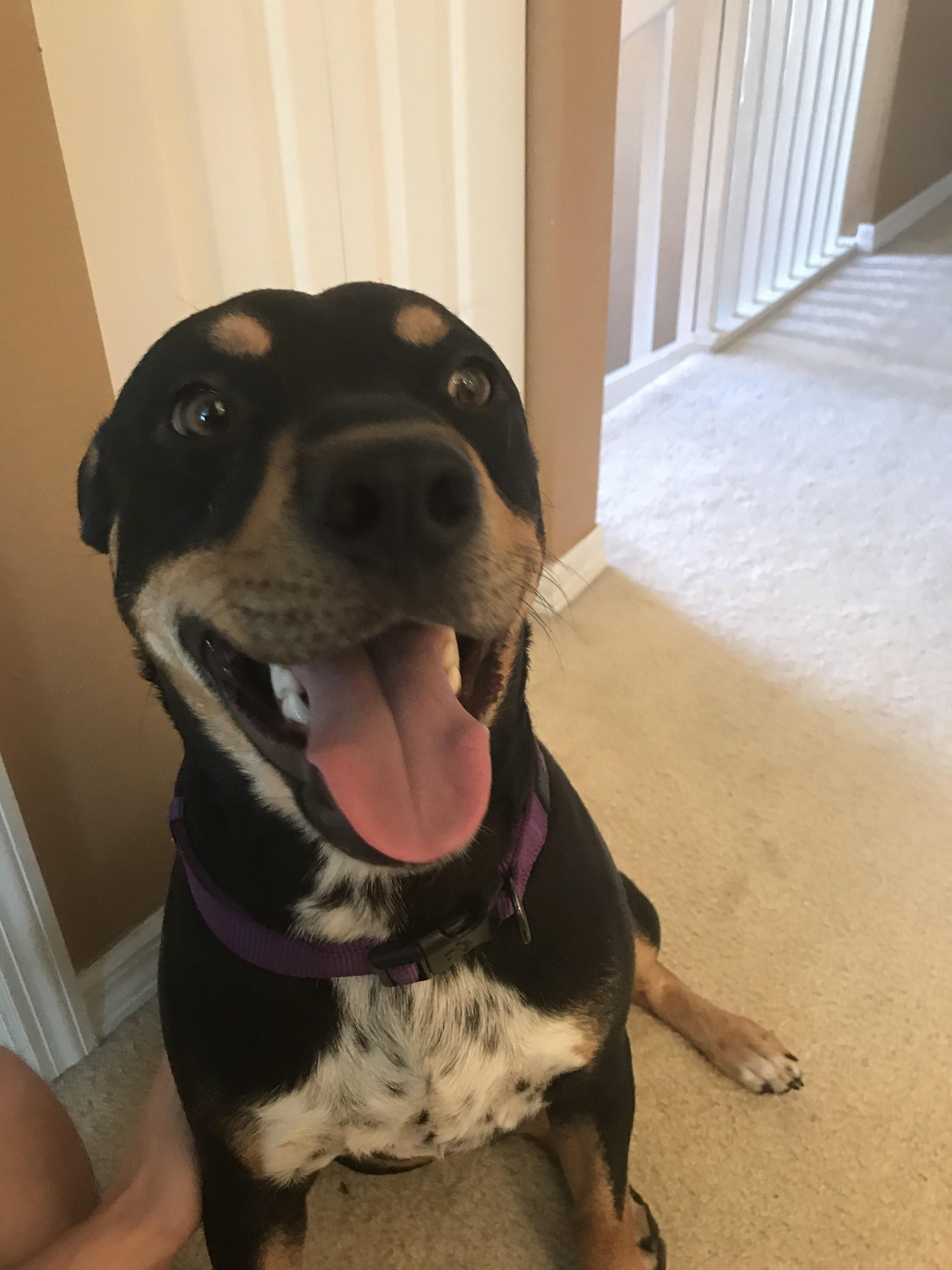 My Gf And I Got Our First Dog Brutus Wanted To Say Hello To Reddit