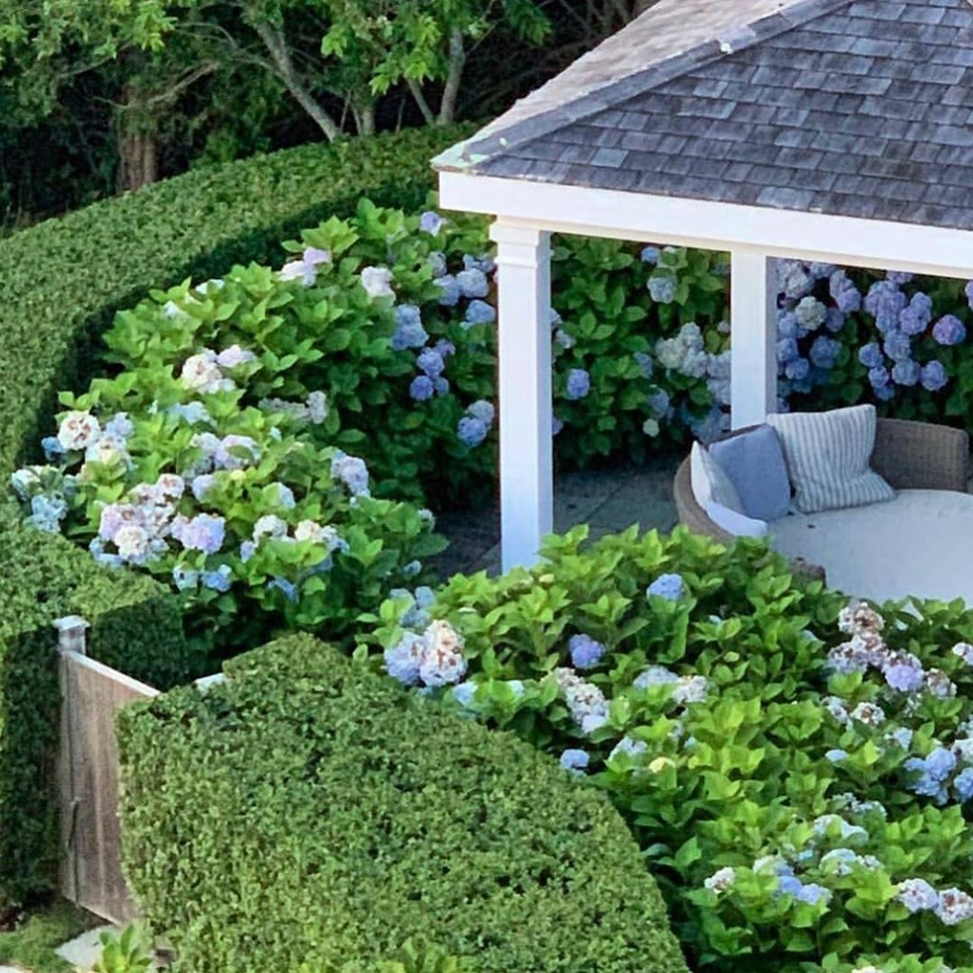 Garden Inspiration New Zealand On Instagram Because I Know We Are All Partial To Beautiful Hydrangea In 2020 Beautiful Hydrangeas Hydrangea Season Garden Inspiration