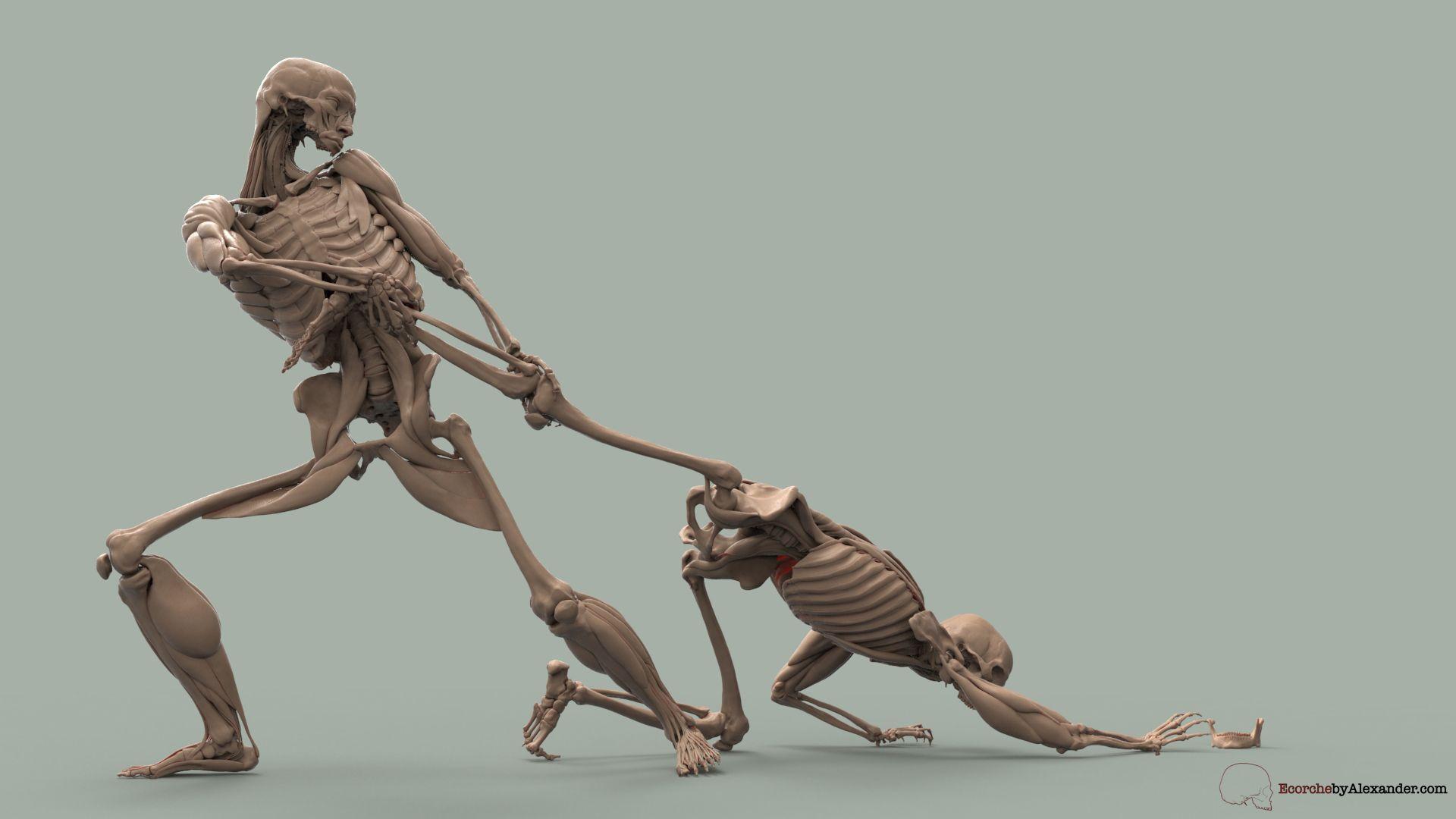 Anatomypunk - Page 6   Sculpting   Pinterest   Anatomy, ZBrush and ...