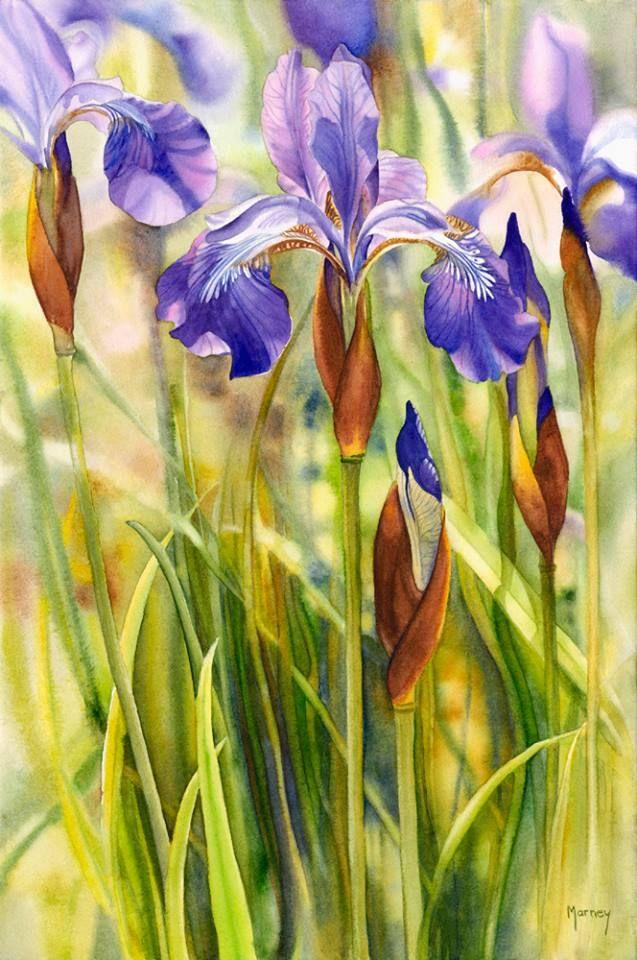 """Marney Ward Siberian Iris II, watercolour, 21x14"""""""