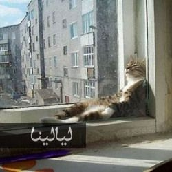 صور قطط مضحكة تنام في أماكن غير متوقعة على الإطلاق Cat Sleeping Positions Cat Sleeping Cats