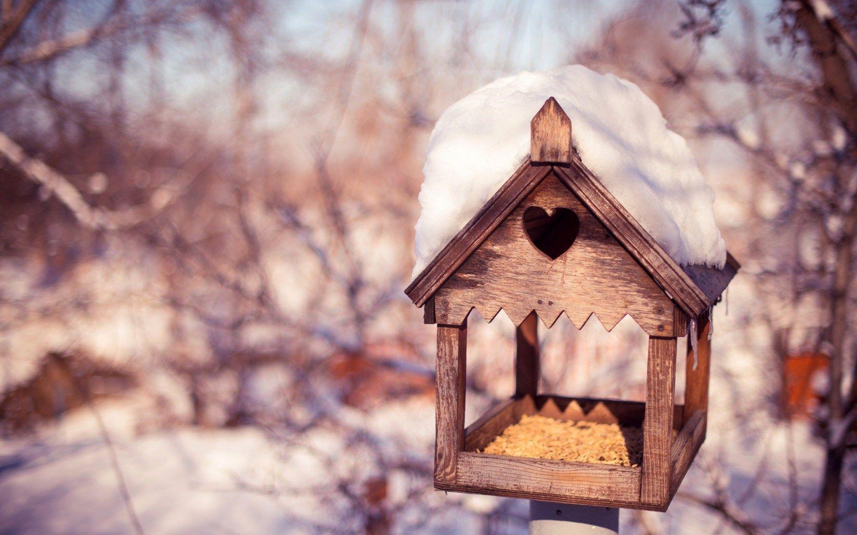Birdhouse Grain Snow Winter Nature Hd Wallpaper
