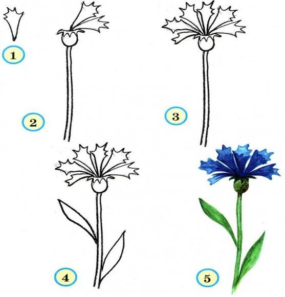Learn To Draw For Kids Flowers Step By Step Pictured