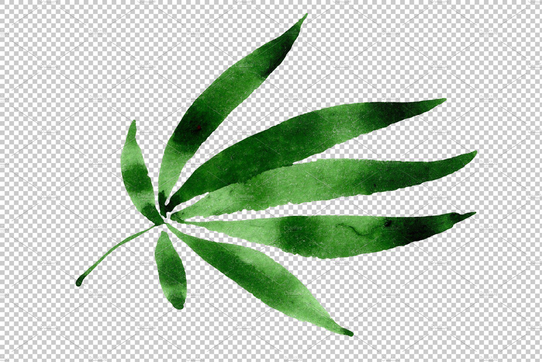 Leaves Hemp Plant Watercolor Png Watercolor Plants Plants Hemp Leaf