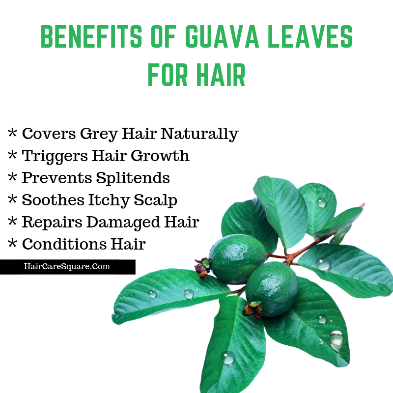 How To Do The Guava Leaves Treatment For Hair Loss & Hair Growth?