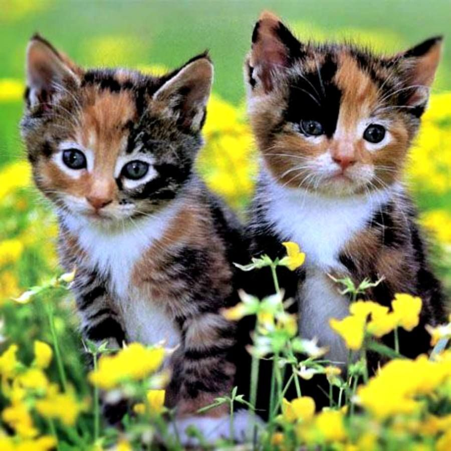Plants Poisonous to Cats Baby cats, Kittens cutest, Cute