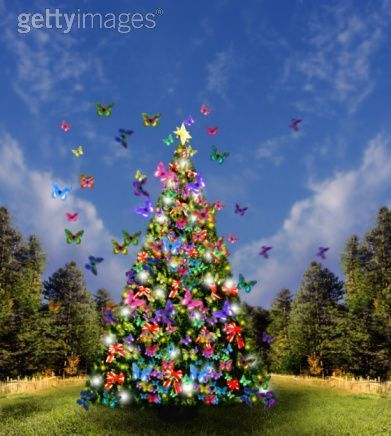 Christmas+tree+and+butterfly+images | Butterfly Christmas ...