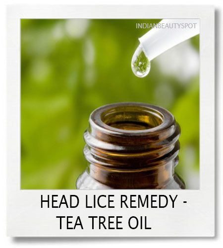 Natural Cure For Head Lice Tea Tree Oil