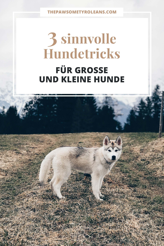 Unsere 3 Liebsten Hundetricks Fur Draussen Die Im Alltag Nutzlich Sind The Pawsome Tyroleans Hundetricks Hunde Tricks Beibringen Hunde