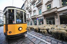 10 Free Things To Do in Milan, Italy