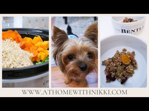 Homemade Slow Cooker Dog Food Recipe Youtube Cooker Dog Dog