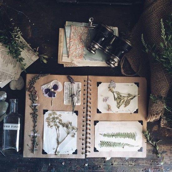 Wie mache ich ein Herbarium? Tausende Ideen für den kreativen Hobby-Botaniker  …