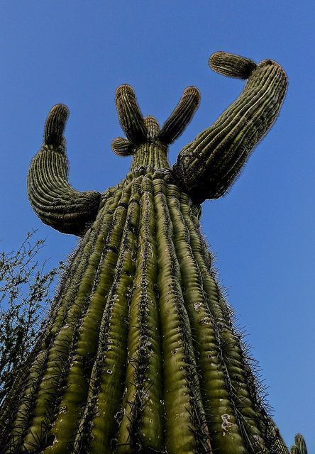 #attackarizona #arizona #cactus #attackCactus Attack Arizona Cactus AttackArizona Cactus Attack #arizonacactus #attackarizona #arizona #cactus #attackCactus Attack Arizona Cactus AttackArizona Cactus Attack #arizonacactus #attackarizona #arizona #cactus #attackCactus Attack Arizona Cactus AttackArizona Cactus Attack #arizonacactus #attackarizona #arizona #cactus #attackCactus Attack Arizona Cactus AttackArizona Cactus Attack #arizonacactus #attackarizona #arizona #cactus #attackCactus Attack Ari #arizonacactus
