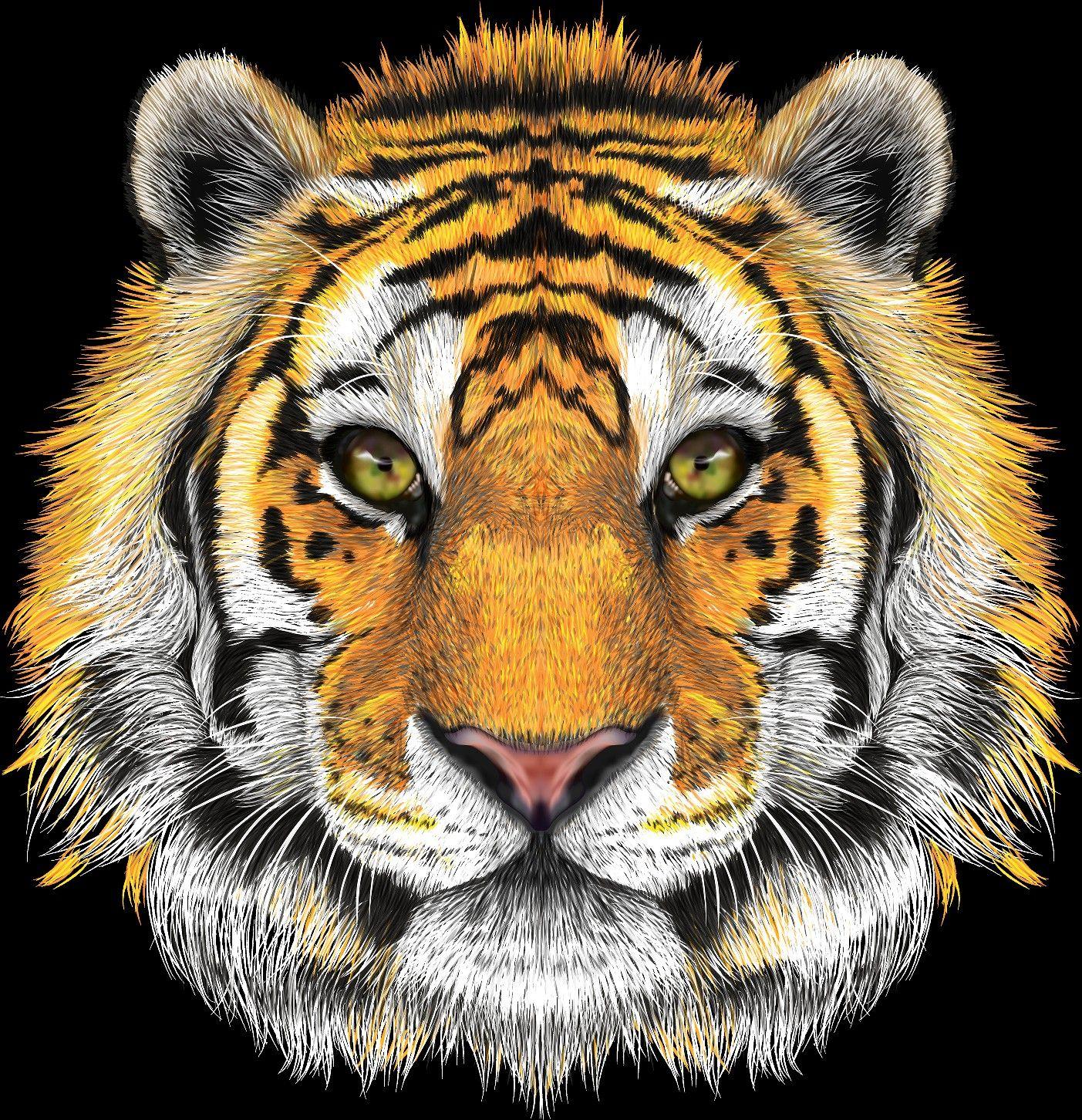 Tiger Face Png Tiger Face Drawing Tiger Face Tiger Art