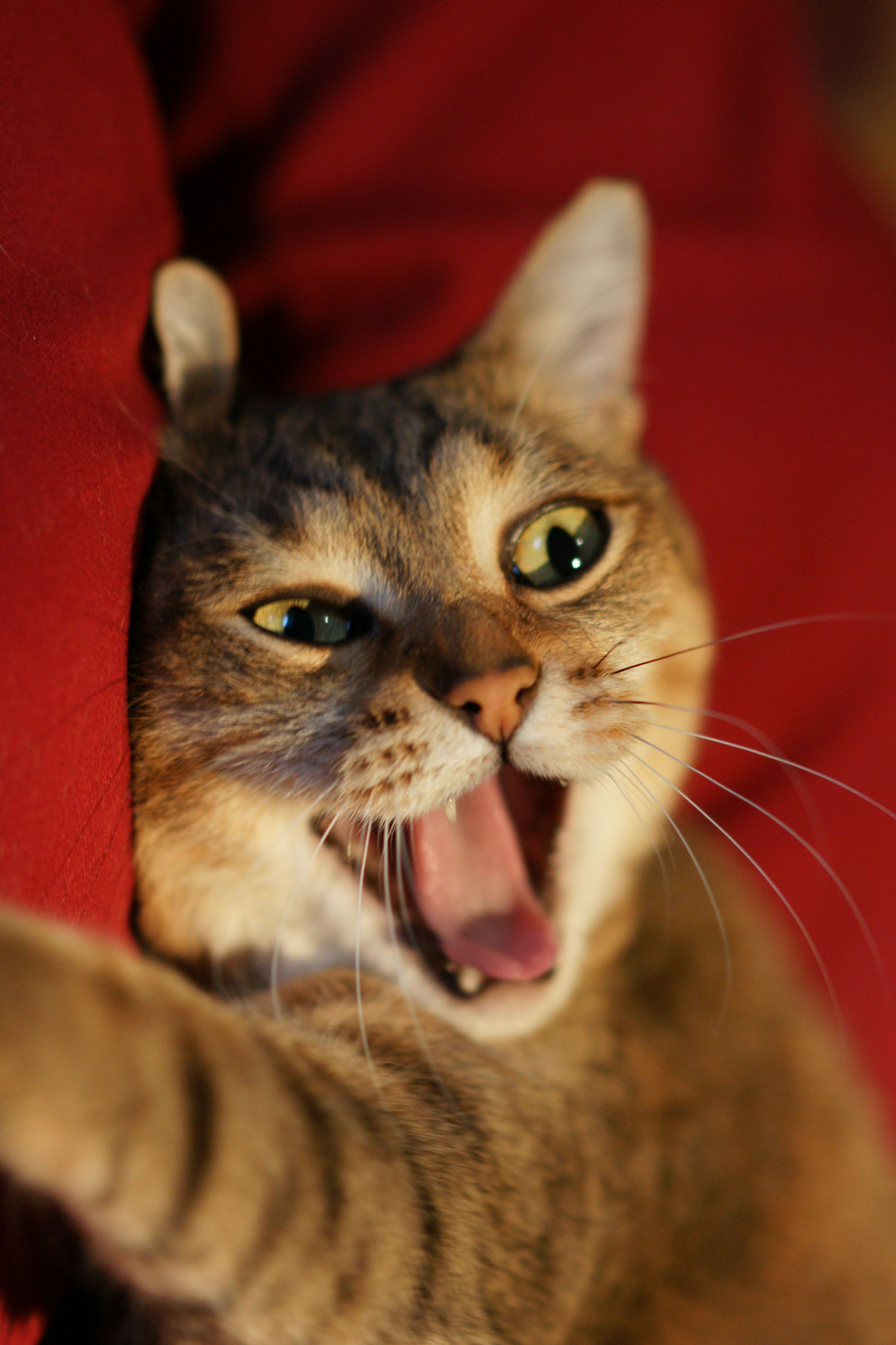 Funny Cat Pictures No Swear Words Cat Best Of The Funny Meme Cats Cat Facts Cute Animal Memes
