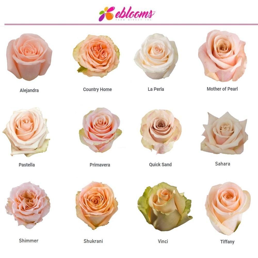 Country Home Peach Rose Variety Ebloomsdirect Rose Varieties Peach Roses Wedding Flower Types