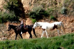 Horseback Riding In Griffith Park To A Mexican Restaurant For Dinner