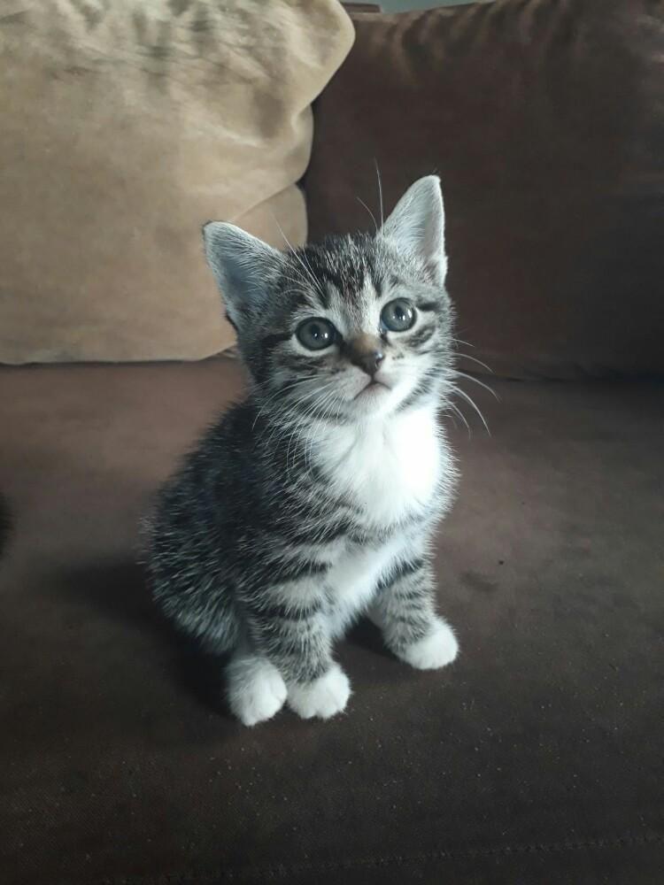 Mooie lieve boerderij kittens te koop Katten en Kittens