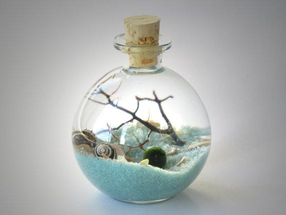 Marimo Terrarium - Bottle Garden. Underwater Terrarium