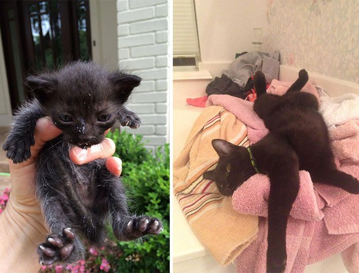 147 Powerful Before After Pics Show How Rescue Can Change A Cat Cats And Kittens Animals Cat Rescue