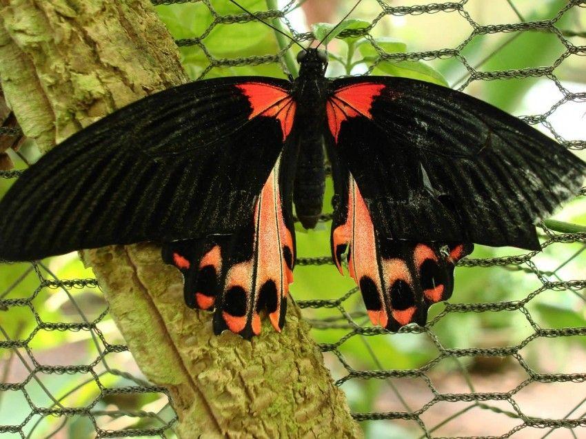 mariposas de brasil - Buscar con Google