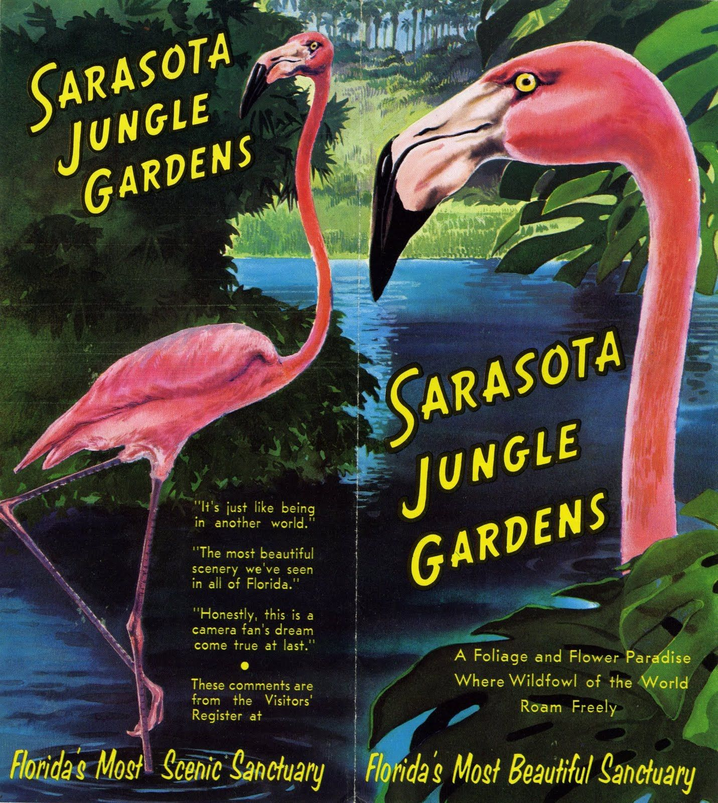 A Brochure For Sarasota Jungle Gardens In Sarasota Florida Sarasota Pinterest Jungle