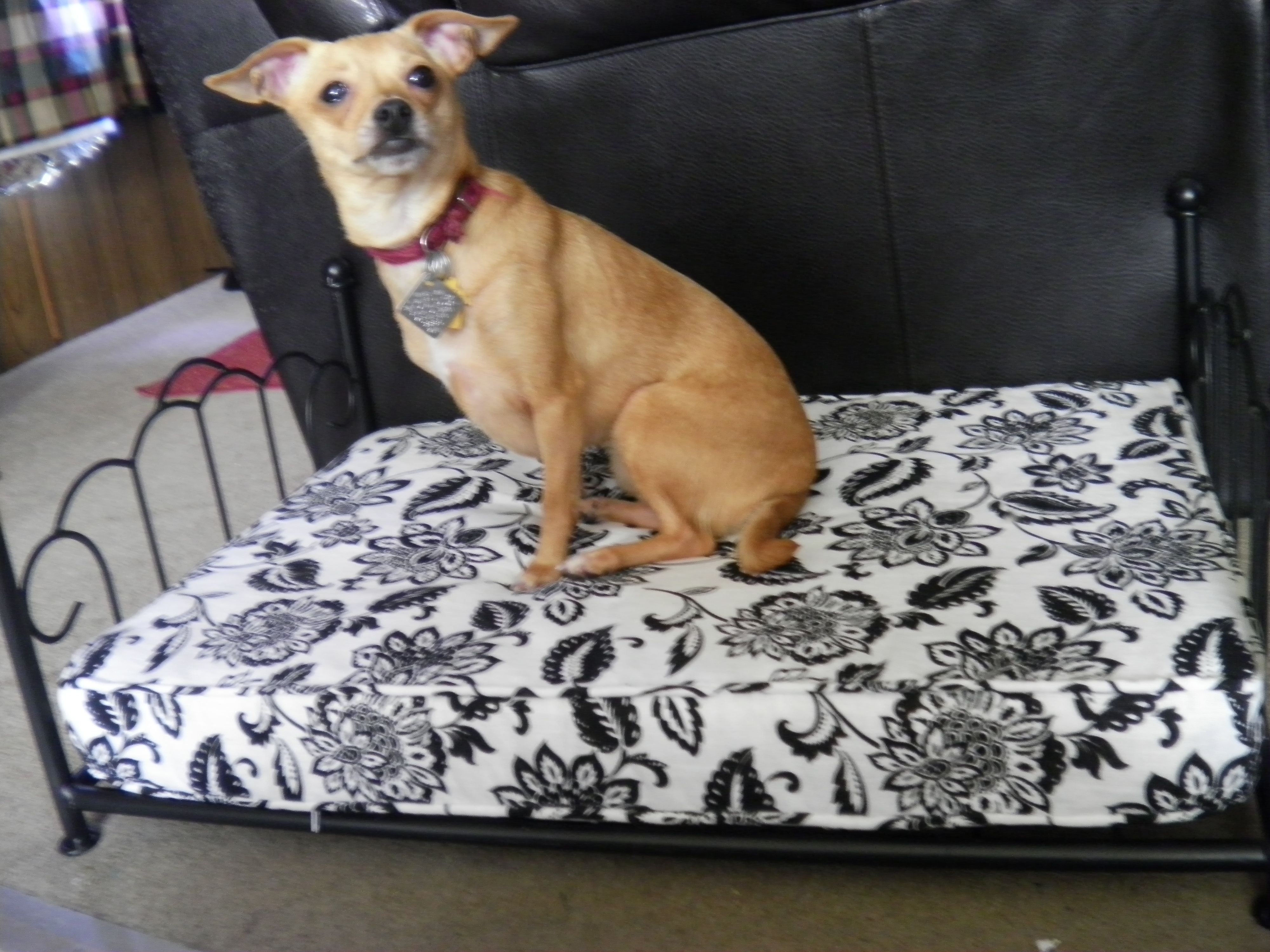 Lulu won the bed that was selected for Bo's adoptive housemate.