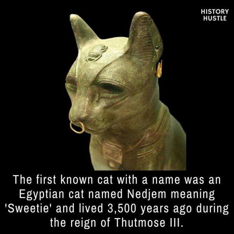 Photo of 10 Unbelievable History Facts You Really Need to See