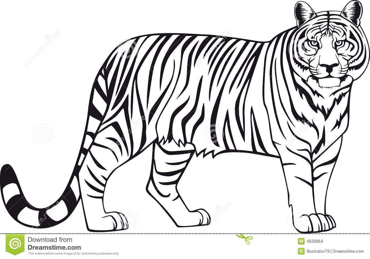 Dibujos De Caras De Tigres Para Colorear: Lujoso Tigre Para Colorear Imágenes