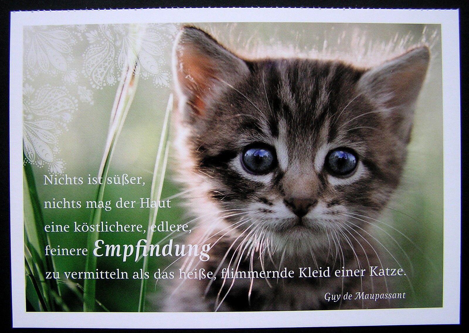 Katzen Sprüche Bilder