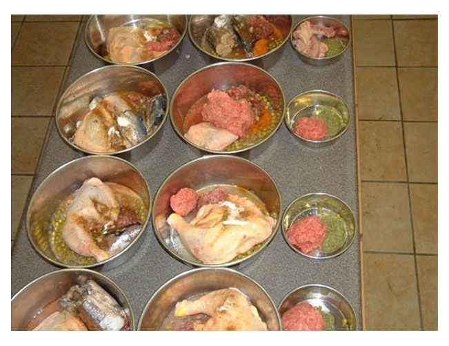 This is the raw diet that i based kanes diet on he loves it and this is the raw diet for dogs they love it and vets have told owners that those who feed their animal this seem to have the healthiest dogs they have ever forumfinder Gallery