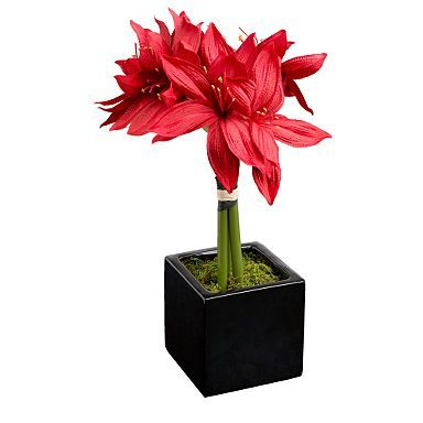 Red amaryllis although could use lillies