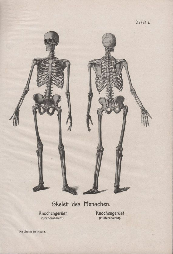 1910 Human Skeleton Anatomy Print Skeletal System Old Medical Book