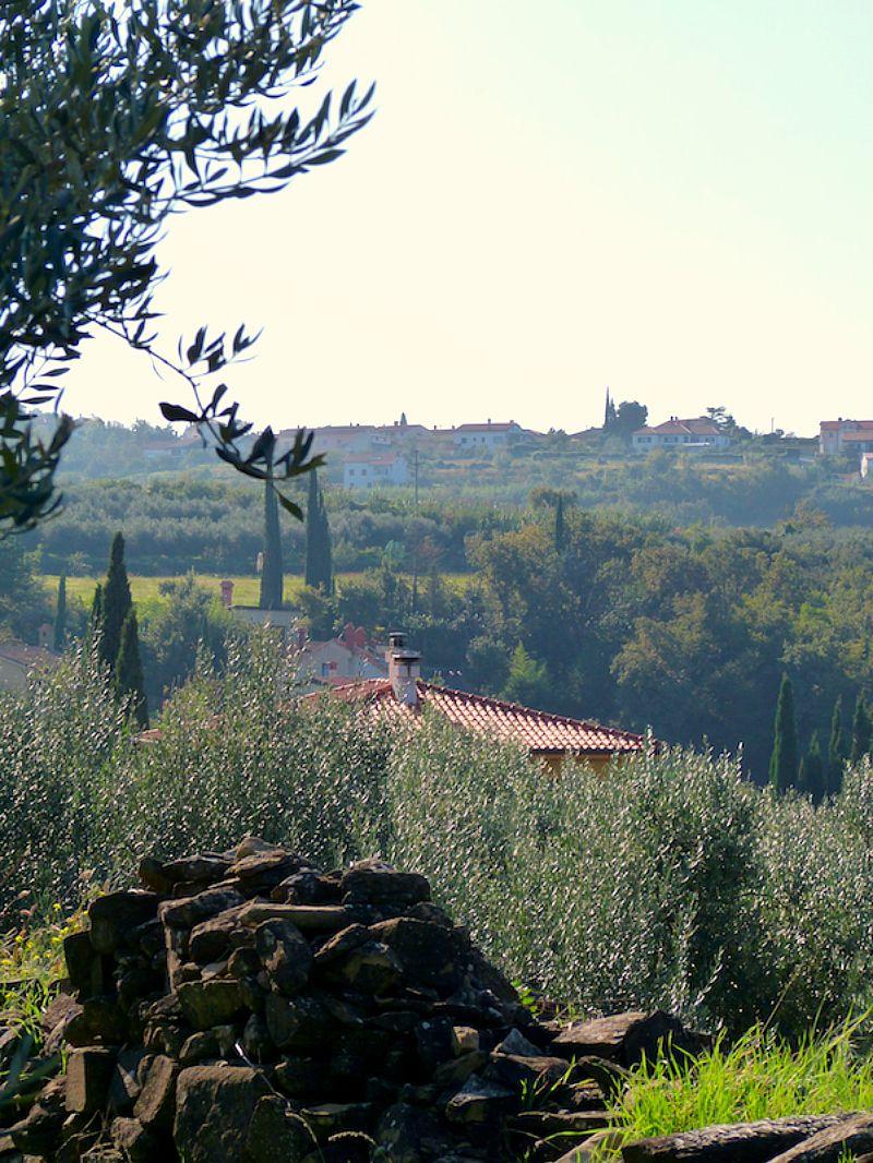 very tuscan views from the vabja ducj olive groves in portorož