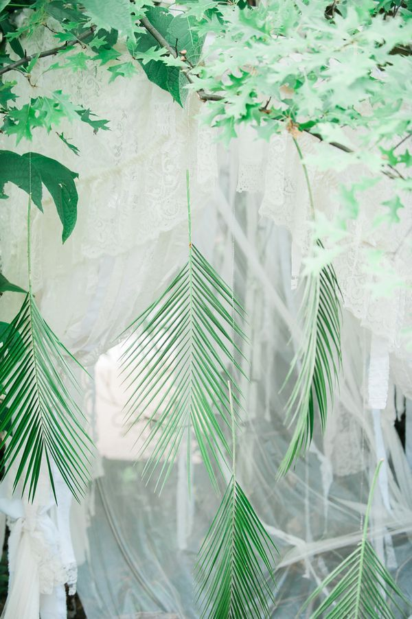 Suspended fronds   Photo by Jenni Grace