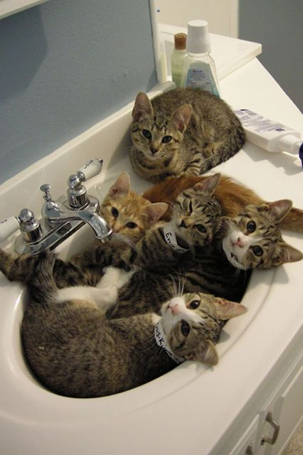 17 photos of cats in sinks because Friday #kittycats