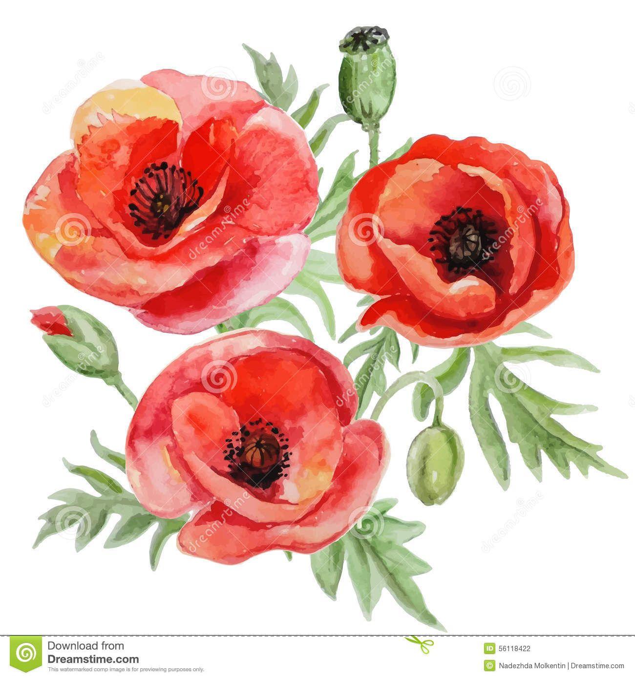 vectorbouquetredwatercolorpoppyflowers56118422.jpg