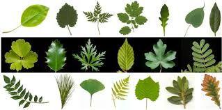 「leaves」的圖片搜尋結果