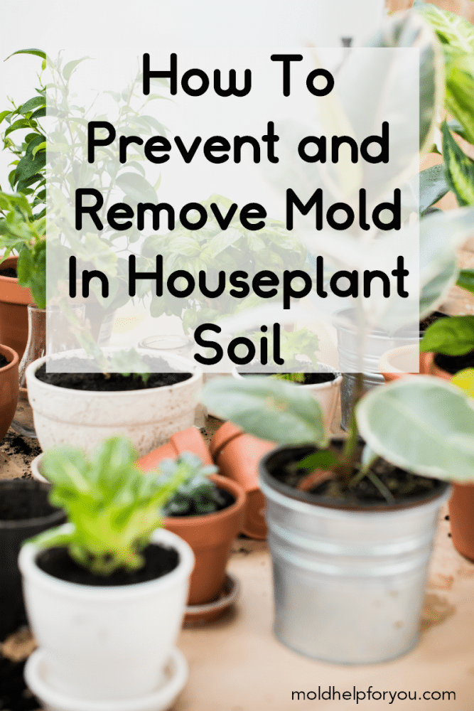 Do You Have White Mold On Potting Soil Learn How To Get Rid Of Mold In Plant Soil As Well As Effective Tips And Tri Container Plants Mold Remover Porch Plants
