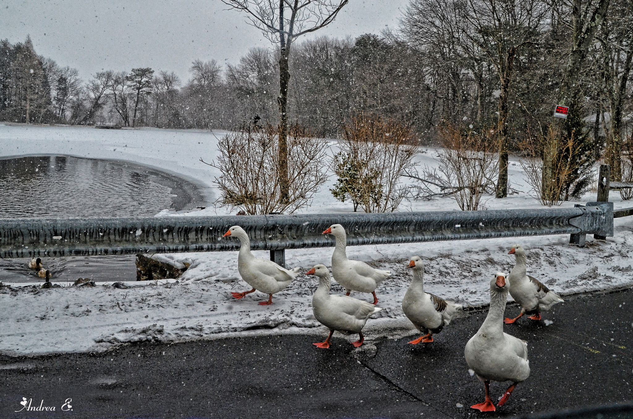 Blizzards are NOT for the birds by Andrea Everhard