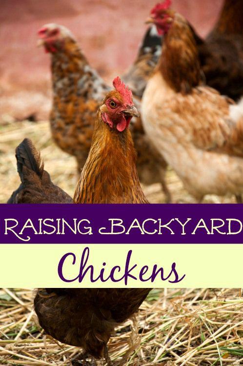 Start Here Diy Ideas Pinterest Chickens Backyard Raising